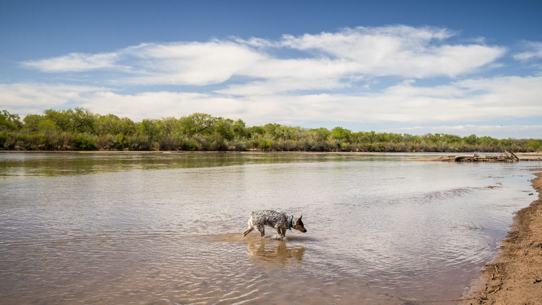 Everest Wading in the Rio Grande
