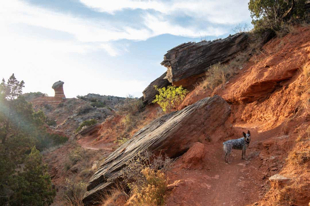Dogs are permitted on all trails in Palo Duro Canyon