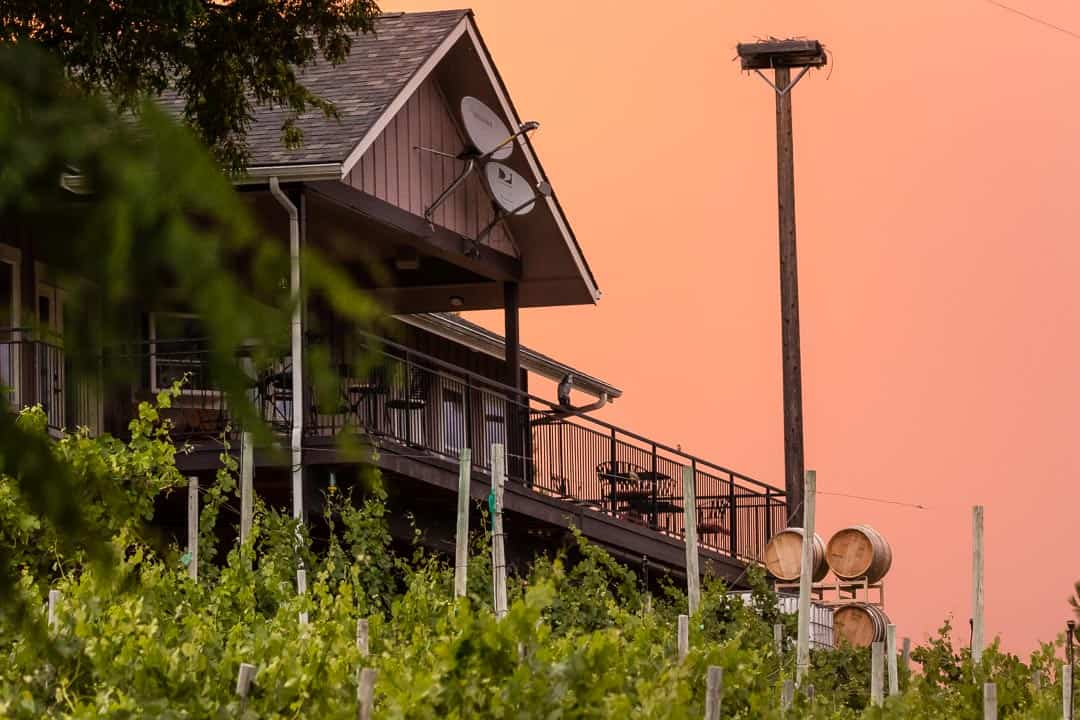 Grape vines at sunset with house in background