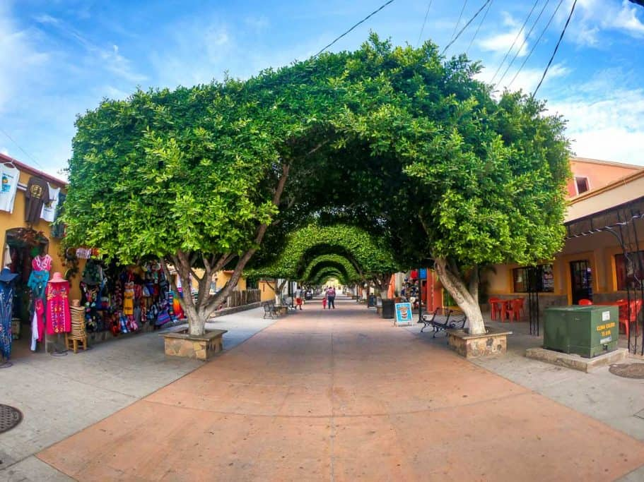 Old Tree Lined Cobble Stone Street in Downtown Loreto